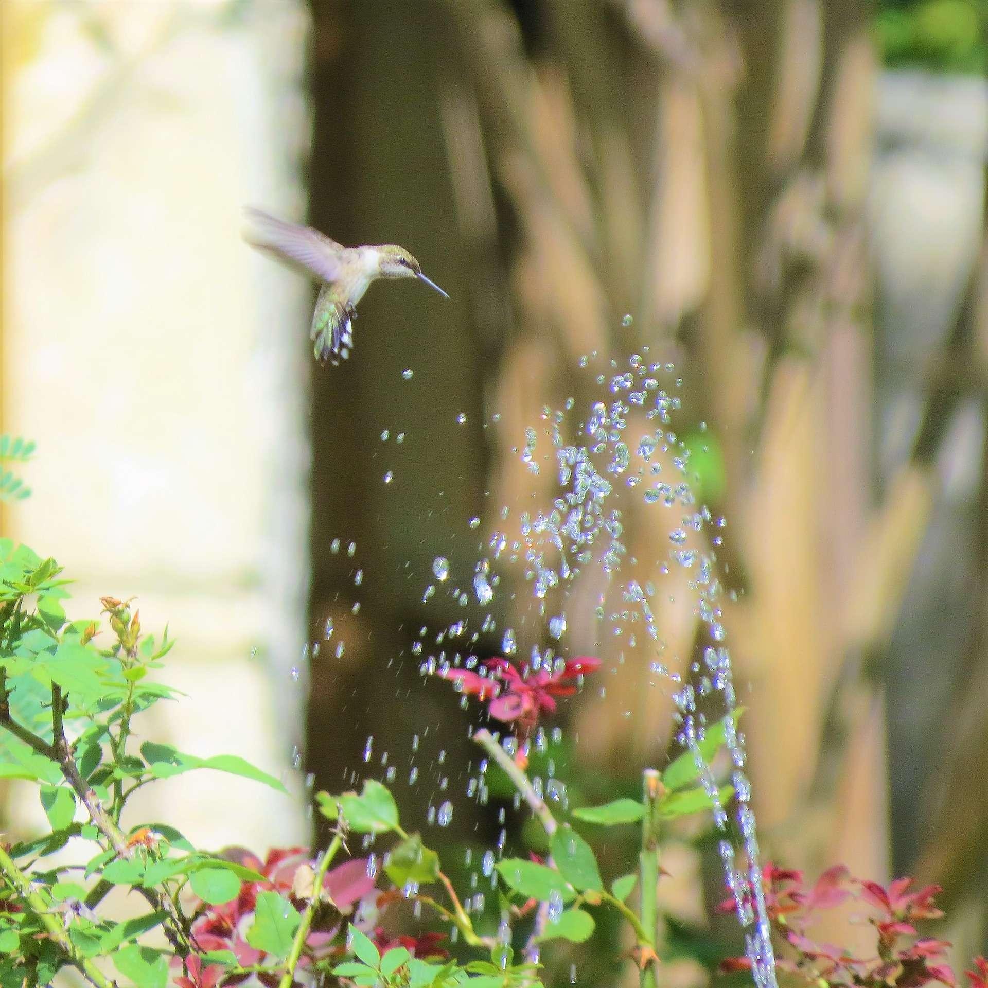 bird-2671244_1920