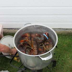 Lobsters going in the pot.
