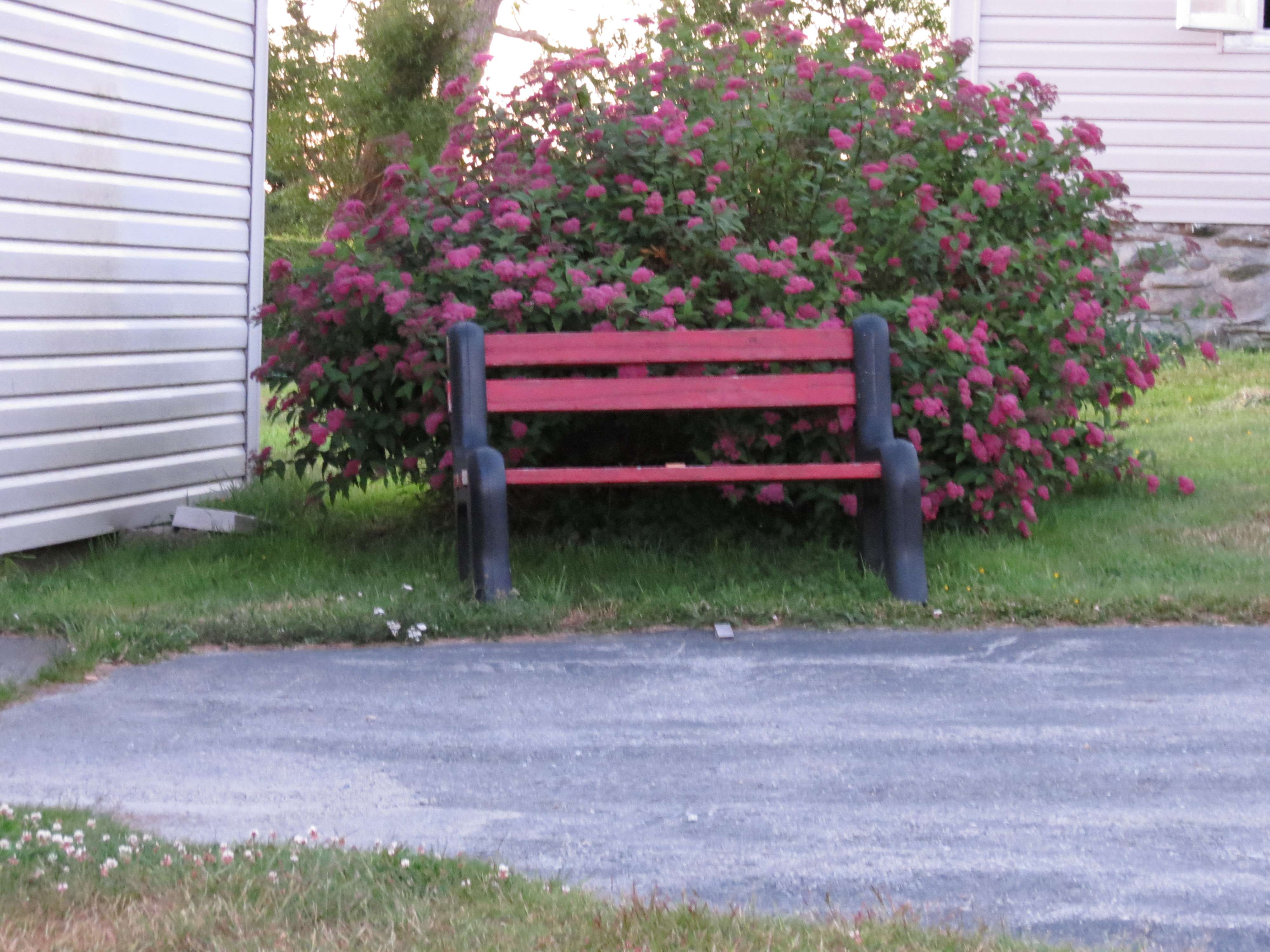 A bench with flowers in Lower East Pubnico.